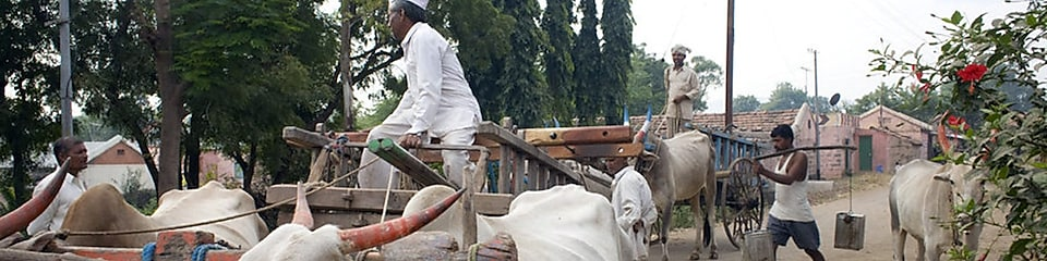 Men at work with bullock carts